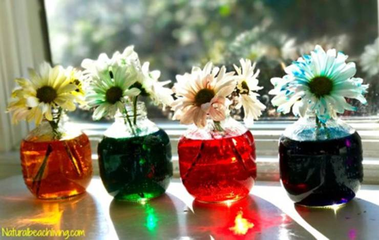 flower science experiment for preschool kids_science activities