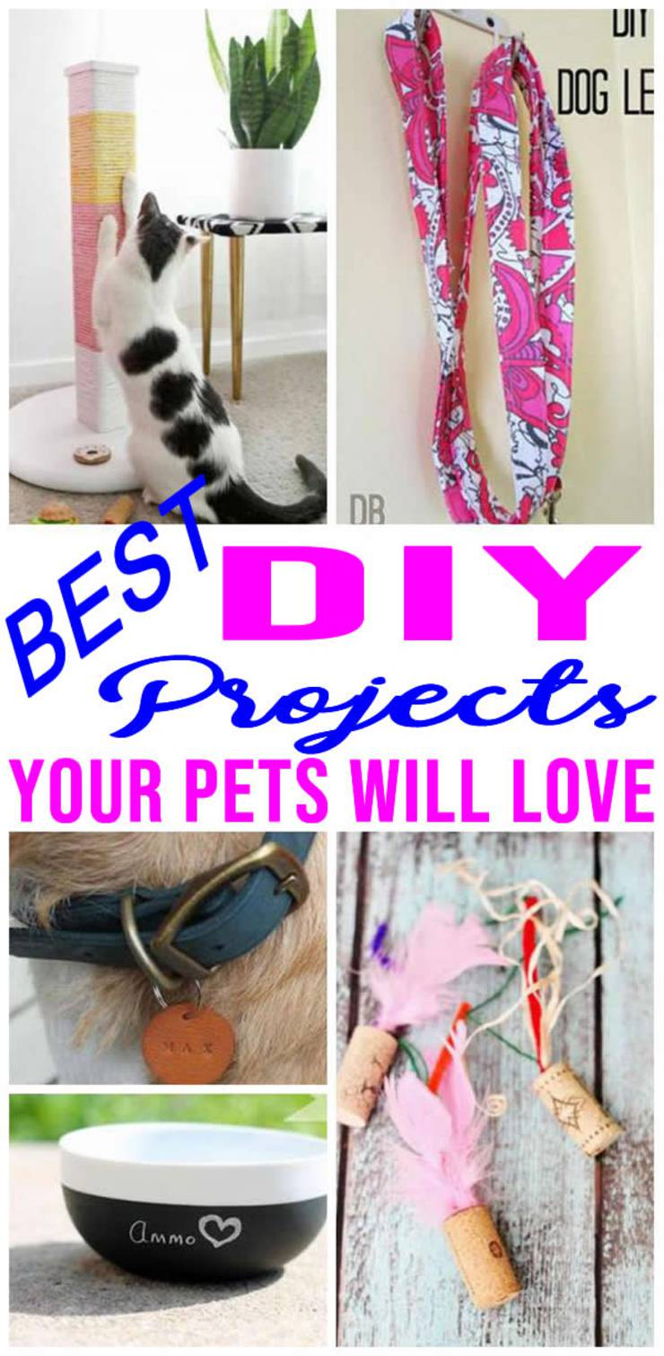 Diy Pet Projects Awesome Ideas Easy Simple Crafts Fun Tutorials How To Make Dogs Cats
